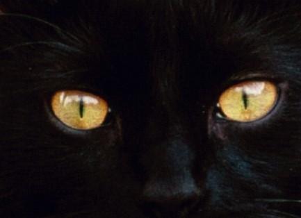 chatnoir2.jpg